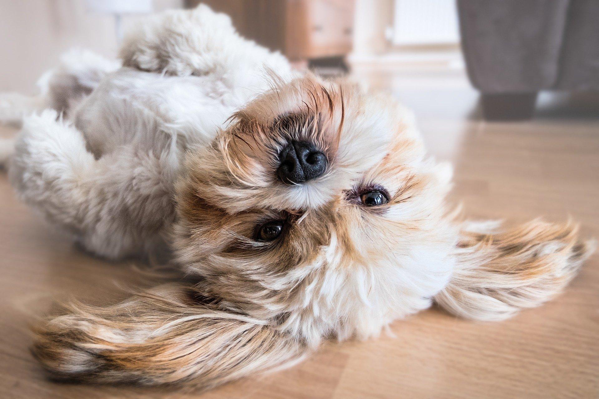 Med hunden på eventyr – det skal du være opmærksom på!